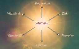 Vitamine-D-cofacteurs-785x360